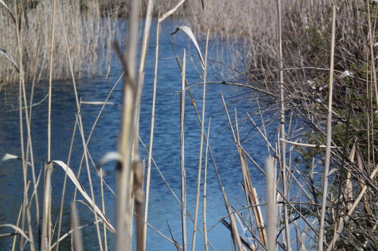 Abundant water in river